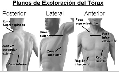 guia_historia_clinica/planos_exploracion_torax_aparato_respiratorio