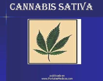marihuana/cannabis_sativa