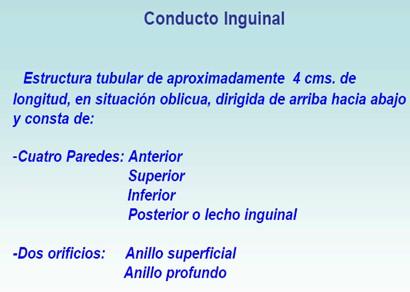 hernias_inguinales/conducto_inguinal