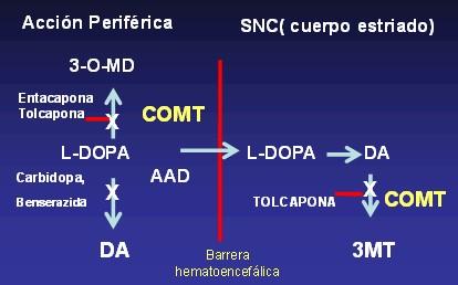 ermedad_de_Parkinson/mecanismo_accion_inhibidores_COMT