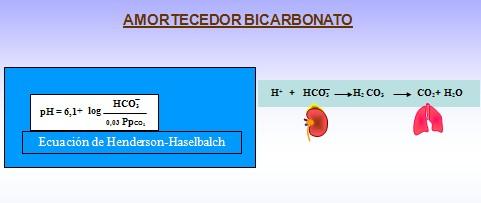 equilibrio_acido_base/bicarbonato_amortiguador_amortecedor