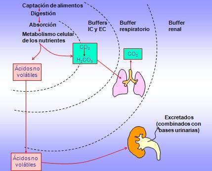 equilibrio_acido_base/fisiologia_fisiopatologia