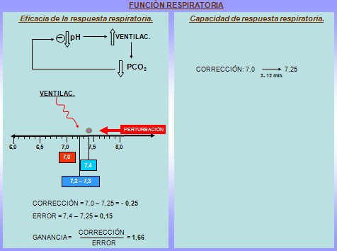 equilibrio_acido_base/funcion_respiratoria