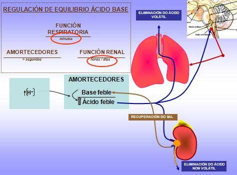 equilibrio_acido_base/regulacion_amortiguacion