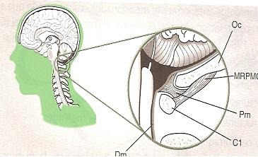 fisioterapia_deportiva_craneosacral/grafico_puente_miodural