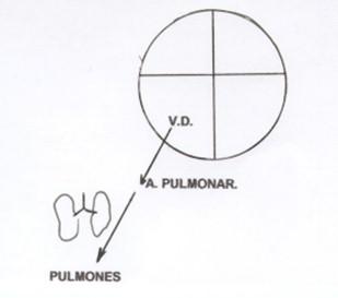guia_basica_fisioterapia/circulacion_menor