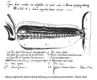 Universidad_Padua_Medicina/dibujo_conducto_pancreatico