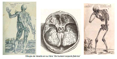 Universidad_Padua_Medicina/dibujos_libro_vesalio