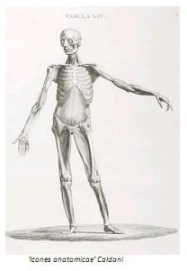Universidad_Padua_Medicina/icones_anatomicae_caldani