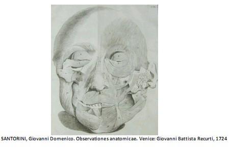 Universidad_Padua_Medicina/imagen_observaciones_anatomicas