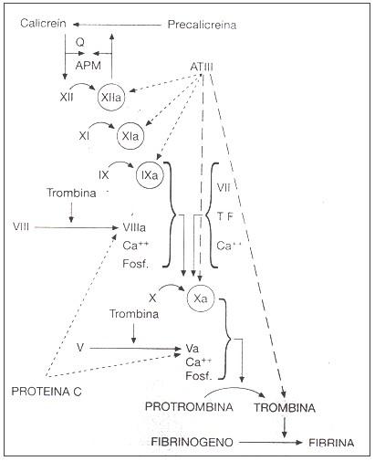 sistema_coagulacion_hemostasia/sistema_contacto_coagulabilidad