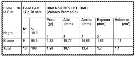 timo_piel_fetal/timo_segun_piel