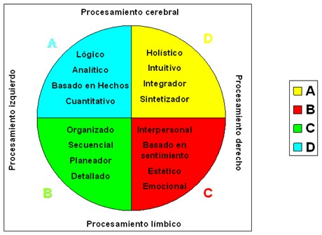 http://www.portalesmedicos.com/imagenes/publicaciones_10/1007_dominancia_cerebral_estudiantes/procesamiento_cerebro_limbico.jpg
