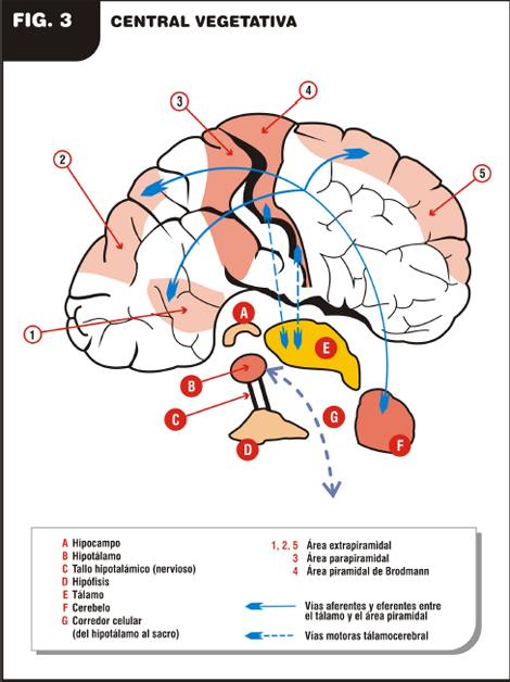 Parkinson - Revista Electrónica de PortalesMedicos.com