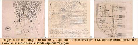 historia_histologia_sinapsis/neuronas_tincion_argifofila