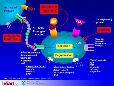 sindrome_coronario_agudo/inhibidores_receptor_GpIIb