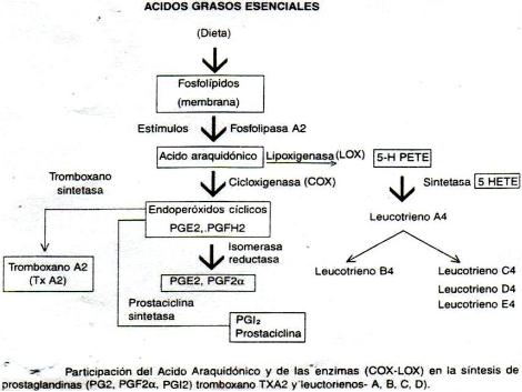 antiinflamatorios_no_esteroideos/AINES