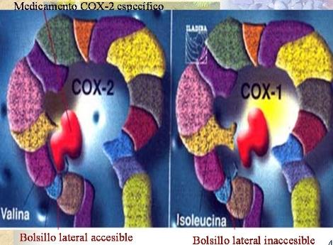 antiinflamatorios_no_esteroideos/selectividad_COX2