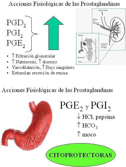autacoides_respuesta_inflamatoria/acciones_fisiologicas_prostaglandinas