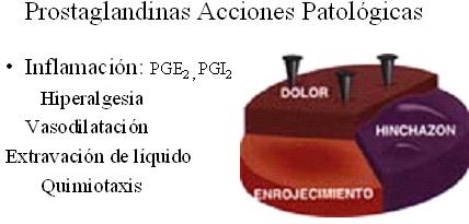 autacoides_respuesta_inflamatoria/acciones_patologicas_inflamatorias