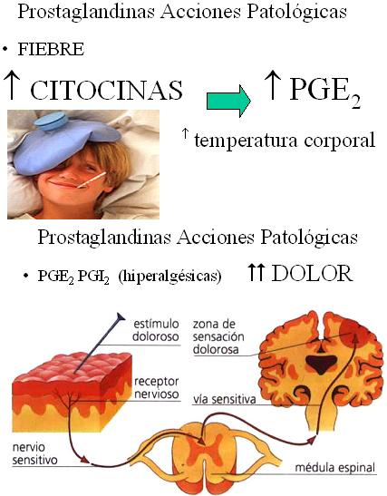 autacoides_respuesta_inflamatoria/acciones_patologicas_prostaglandinas