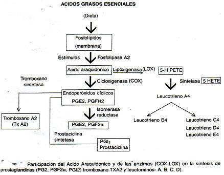autacoides_respuesta_inflamatoria/acido_araquidonico_cox