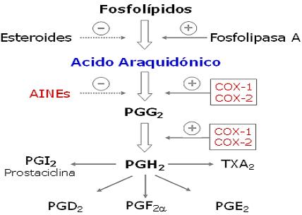 autacoides_respuesta_inflamatoria/ciclo_produccion_prostaglandinas