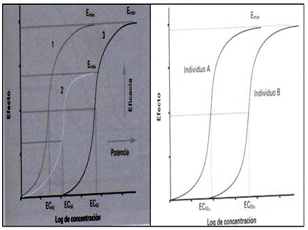 farmacodinamia_farmacologia/curva_respuesta_gradual