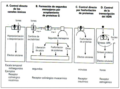 farmacodinamia_farmacologia/familia_de_receptores2