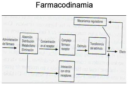 farmacodinamia_farmacologia/farmacodinamia_administracion_farmaco