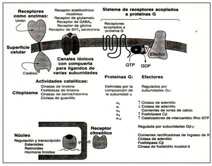_farmacodinamia_farmacologia/receptores_como_enzimas