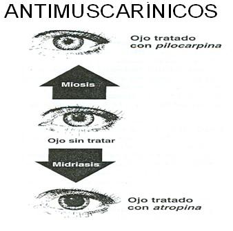 farmacos_antagonistas_muscarinicos/tratamiento_intoxicacion_atropinicos
