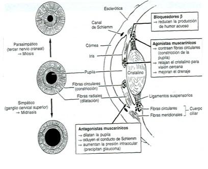 farmacos_antagonistas_muscarinicos/tratamiento_intoxicacion_atropinicos2