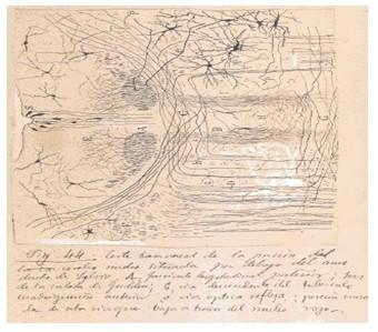 historia_sinapsis_neuronal/neuronas_material_argirofilo2