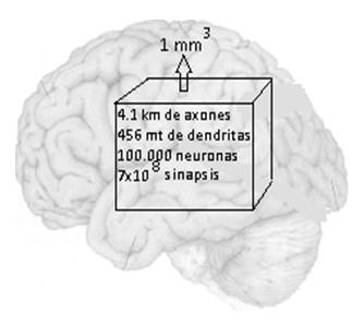 historia_sinapsis_neuronal/numero_neuronas_sinapsis
