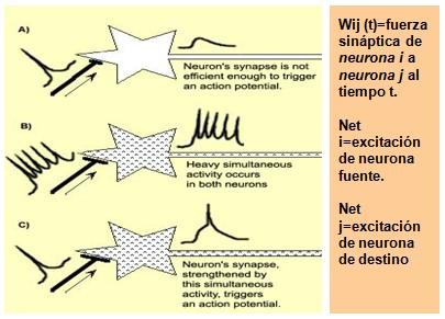 historia_sinapsis_neuronal/potenciacion_post_sinaptica