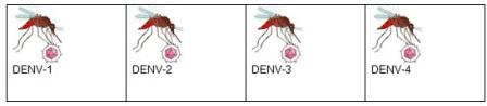 conocimientos_enfermedad_dengue/actividad_2_serotipo_mexico