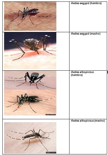 conocimientos_enfermedad_dengue/actividad_caracteristicas_vectores