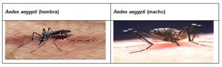conocimientos_enfermedad_dengue/actividad_trasmision_humano