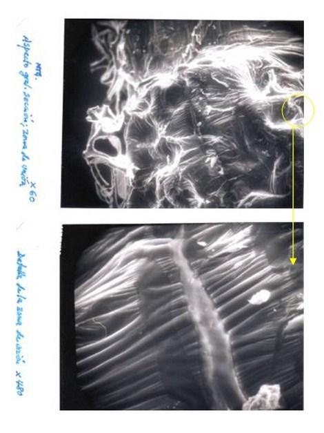 aplicaciones_tecnologia_termoplastica/figura_uno_microscopia