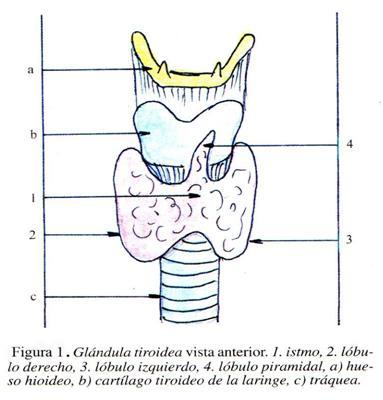 importancia_protector_tiroides/figura_1