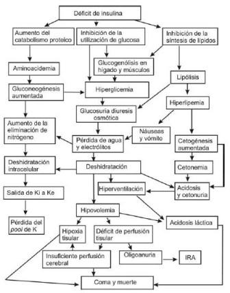 tratamiento_cetoacidosis_diabetica/esquema_fisiopatogenia_CAD
