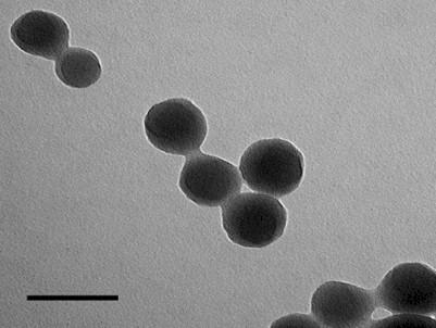 nanotecnologia_nano_medicina/nanoparticulas_microscopio_electronico