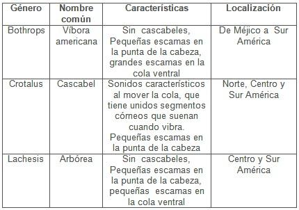 mordeduras_serpientes_venenosas/viboras_familia_crotalidae