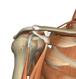 rehabilitacion_sindrome_subacromial/articulacion_hombro