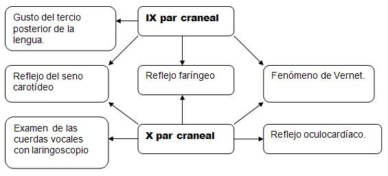 Guia basica para la confeccion de una historia clinica xv for Cuarto par craneal