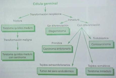 tumores_ovario_tumor/celula_germinal_ovaricos