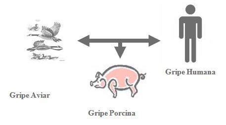 gripe_porcina_H1N1_A/aviar_humana_virus