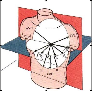 ECG_electrocardiografia_basica/derivaciones_del_ecg