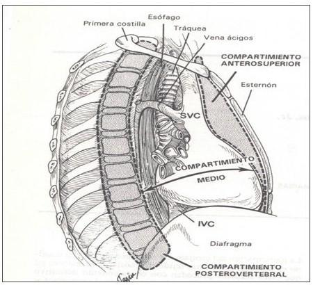 anatomia_mediastino_mediastinica/mediastino_compartimientos_dibujo